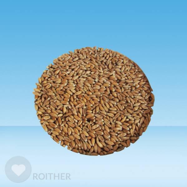 Dinkel Korn 1kg