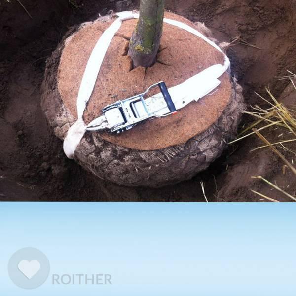 BIO Ballenverankerungsset OHNE Erdanker für Stammumfang bis 35 cm