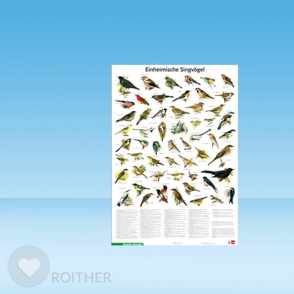 Naturtafel / Poster Einheimische Singvögel