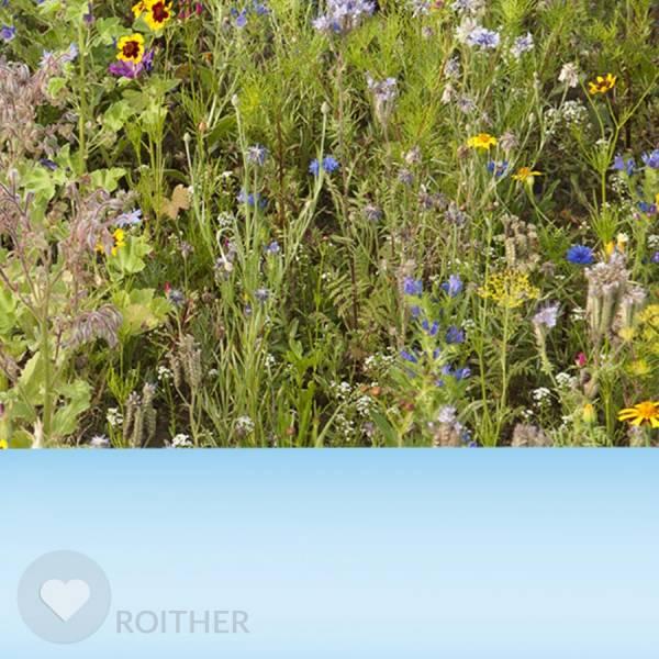 """Blumensamenmischung """"Bienenweide mehrjährig"""""""